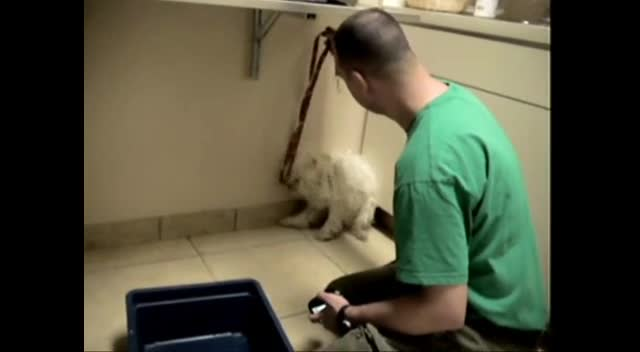 Dog Rescued an Hour Before Euthanasia - MUST SEE REACTION - Cute Videos