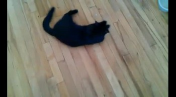 BreakDancing Kitty