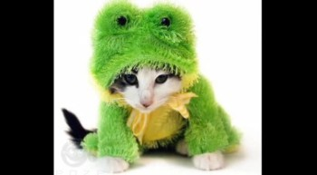Pets in Costumes!