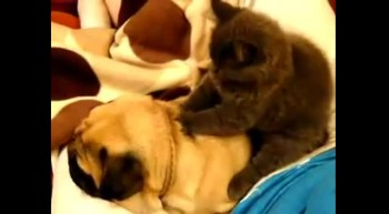 Kitten Gives Dog a Much Needed Massage