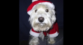 Pets Dressed up for Christmas! ADORABLE!