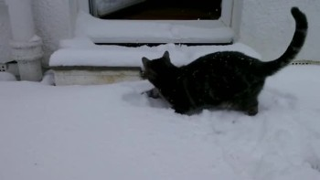 Playful Cat Ventures Into Snow for the First Time - LOL!