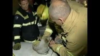 Heroic Dog Risks Life to Guard Kittens in Devestating House Fire