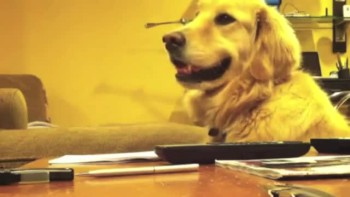 Golden Retriever LOVES to Bop Along to the Guitar