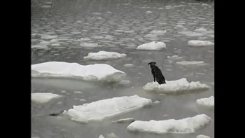 Dog Rescued from Iceberg!