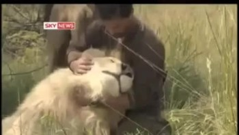 The Shocking Relationship Between a Man and Wild Lions - You've Gotta See This!