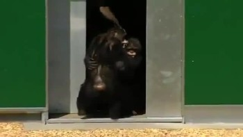 Chimps Held Captive for 30 Years Play Outside For the FIRST TIME EVER - A Beautiful Moment