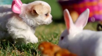 A Puppy Easter - A CUTE Celebration of God's Creation!