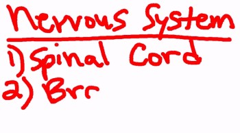Information regarding our nervous system.  Copyright © 2013 Zoetime Ministries, Inc.