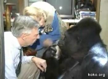 Talking Gorillia Tells Mr. Rogers She Loves Him