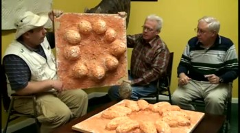 #421 Dinosaur Eggs Buried in Noah's Flood