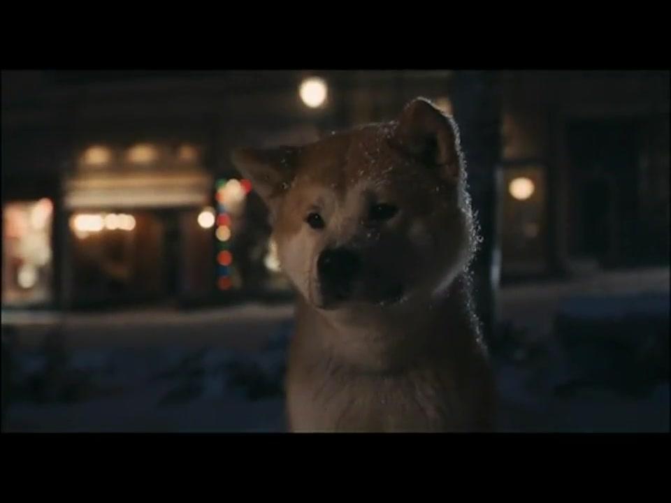 The Tearjerking True Story Of A Dogs Unending Loyalty Inspirational Videos