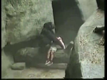 Gorilla Saves Toddler's Life After He Fell into Den