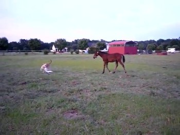 Horse and Dog Have a Ball Playing Tag Together
