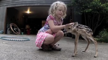 The Sweetest Fawn Came Out of the Wild to Bond With a Little Girl