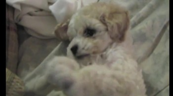 Ridiculously Adorable Puppy Prays :)