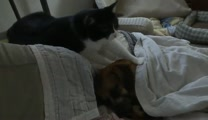 Cat Massaging Sleeping Dog