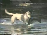 Dog Catches a HUGE Fish!