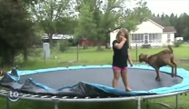Funny Animals Jump for Joy on a Trampoline :)