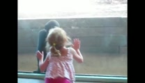 Little Girl Befriends Baby Gorilla at Zoo