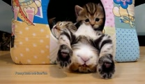 Polite Kitty Tries Not to Wake His Siblings