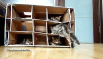 Cute Kitten Overload! Sweet Kitties Play in a Handmade Fort