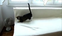 When You See How This Kitty Plays, You'll Just HAVE to Laugh