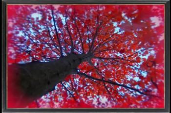 The Crimson Tree