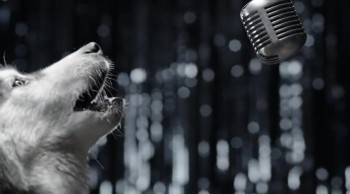 See Why These Dogs Are Singing... It's WAY More Important Than You Think