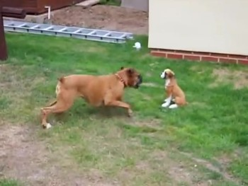 Hilarious Dog Wants to Play with the Funniest Thing!
