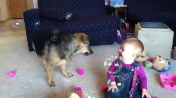 Baby and Her Doggie Friend Have the Best Time Playing with Bubbles