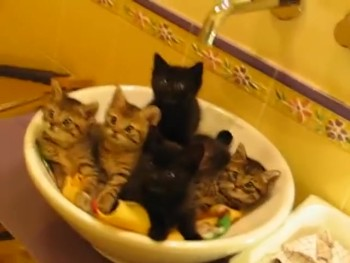 These Synchronized Kittens are the Cutest Thing Ever. Really!