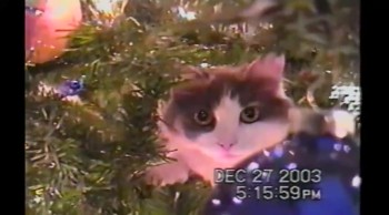 Cute Cats Can't Resist Climbing Christmas Trees