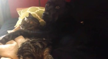Cuddling Kitty and Dog Will Put a Big Smile on Your Face