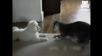 Cute Cat Teaches A New Dog Old Tricks!  So Cute!