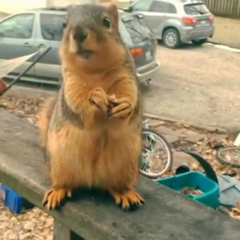 Talking Squirrel Sends Message of Love to His Human Neighbor --LOL!