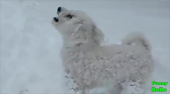It's Hard Not to Laugh When You See What these Doggies Do In the Snow
