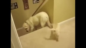 THIS is What Makes Dogs and Cats so Different.  Don't Miss the Ending!  Hilarious!
