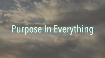 Purpose In Everything