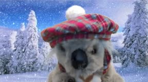 Comments from the Koala 15: Saying Thank you from Snowy Pines