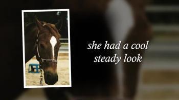 Xulon Press book Spirit of the Warhorse; Kitty Silverwings, An Appaloosa Story | Patti Ansuini