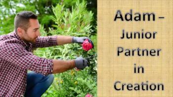 Adam - Junior Partner in Creation
