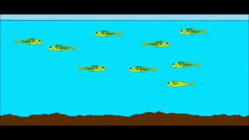 How Did Freshwater Fish and Insects Survive Noah's Flood?