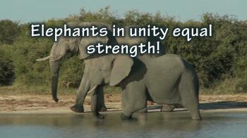 Unity, agreement and harmony equal strength for the body of Christ!