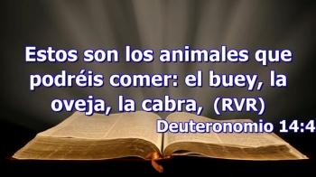 35. La discutida visión del lienzo de animales - Panorama histórico del cristianismo
