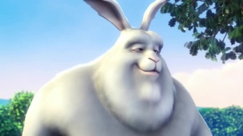 rabbit goes in walk