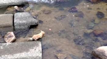 Ingenius Puppy Plays Like a Kid - So Cute!