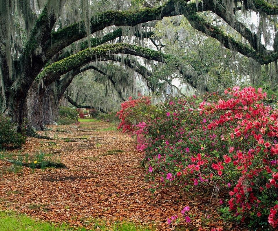MagnoliaPlantationSC