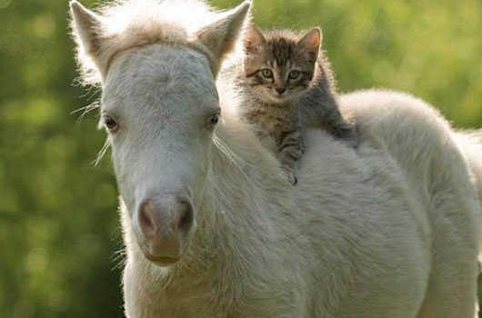 [Image: Cat-and-Horse.jpg]
