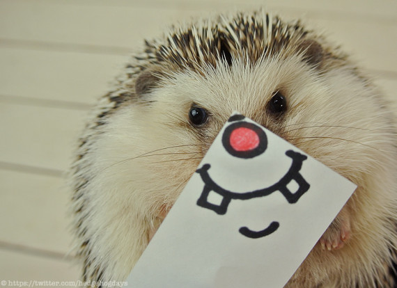 Hedgehog you are so cute I wanna pinch your wittle cheeks.